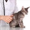 Ветеринарные клиники в Бородино